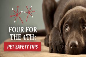 Firework Safety | Garden Valley Veterinary Hospital