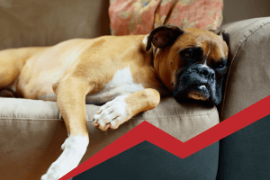Pain Management in Pets | Garden Valley Veterinary Hospital
