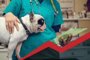 Importance of Rabies Vaccines | Garden Valley Veterinary Hospital