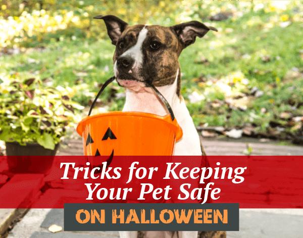 Halloween Pet Tips | Garden Valley Veterinary Hospital