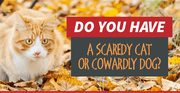 Tips for Fear Free Visits | Garden Valley Veterinary Hospital